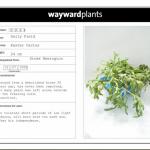 Wayward Plants